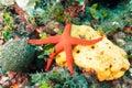 Starfish and Sponge underwater Royalty Free Stock Photo