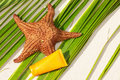 Starfish and sun protection tube on palm leaf Stock Images