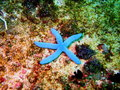 Starfish the surprising underwater world of philippine sea island mindoro Stock Photos
