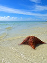 Starfish on tropical beach Stock Photo