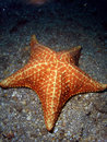 Starfish under Bridge Stock Photography