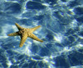 Starfish water background Royalty Free Stock Image