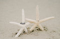 Starfish wedding rings two resting on in the sand Royalty Free Stock Photo