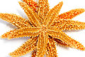 Starfishes Royalty Free Stock Images