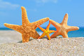 Starfishes on the beach against a blue sea Royalty Free Stock Images