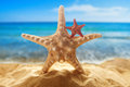 Starfishes on the beach big and small sandy at ocean background Stock Photography