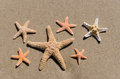 Starfishes on the sand Stock Image