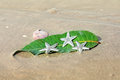 Starfishes sea shell and leaf on the sand summer vacation background Royalty Free Stock Photo
