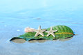 Starfishes sea shell and leaf on wet sand the summer vacation background Stock Photography