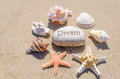 Starfishes and seashells with rock on the sand Royalty Free Stock Photo