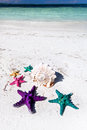 Starfishes in tropic paradise travel vacation concept colour on white beach tourism Stock Images