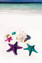 Starfishes in tropic paradise travel vacation concept colour on white beach tourism Stock Image