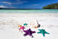 Starfishes in tropic paradise travel vacation concept colour on white beach tourism Royalty Free Stock Photo