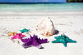 Starfishes in tropic paradise travel vacation concept colour on white beach tourism Royalty Free Stock Photography