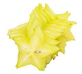 Starfruit or carambola vii over white background Royalty Free Stock Image