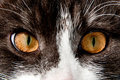 Staring cat eyes Royalty Free Stock Photography