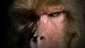 Staring monkey ferocious at me Stock Image