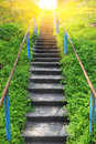 Staris in forest stairs at spring time Royalty Free Stock Images