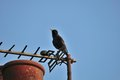 Starling on an antenna a lone perched my tv which is attached to my chimney the roof of my house Stock Photo