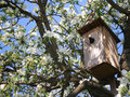 Starling in the birdhouse in a tree on blossoming apple Royalty Free Stock Photography