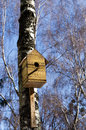 Starling house Royalty Free Stock Photography