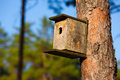 Starling house in forest Royalty Free Stock Photography
