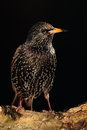 Starling view of a against a black background Stock Photography
