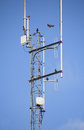 Starlings and high technology antennae use a modern electronic to congregate perch Royalty Free Stock Photography