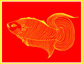 Starred fish it is auspicious Royalty Free Stock Photo