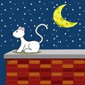 Starry Night White Cat Royalty Free Stock Photo