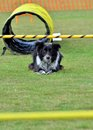 At the start line obedience testing stay focused Royalty Free Stock Photography
