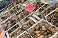Start of the truffle fair in Alba (Cuneo), has been held for more than 50 years, the donkey race Royalty Free Stock Photo