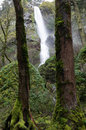 Starvation creek falls in the early spring Royalty Free Stock Image