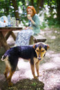 Starving stray dog near picnic table person eating in background Royalty Free Stock Photos