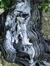 Stary winogronowy winorośli serii Fotografia Stock