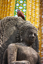Statue of buddhist with the bird Stock Image