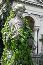 Statue covered with ivy Royalty Free Stock Photo