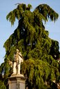 Statue of man with beard placed in front of a large tree in Vicenza in Veneto (Italy) Royalty Free Stock Photo