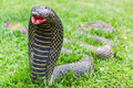 The statue of the snake in garden art Royalty Free Stock Photo