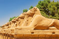 Statues of ram headed sphinxes in karnak ancient temple luxor Stock Photo