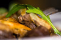 Steak and kidney pie close up of meat with rocket leaf Royalty Free Stock Photo