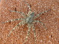 Stealthy spider look close this is really the coolest of cool Royalty Free Stock Photography
