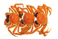 Steam Cooked Hairy Crabs Stock Photography