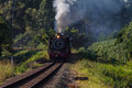 Steam train coaches landscape tourism and with tourists viewing the green hills and on board from kloof station outside durban up Stock Photo