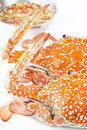 Steamed blue swimming crab with sauce Stock Photography