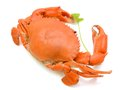 Steamed crab isolated on white background Stock Photos