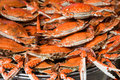 Steamed  Spotted Crab