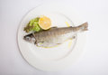 Steamed trout fish Royalty Free Stock Photo