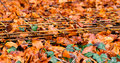 Steel cluster used for building wall laying on the fallen autumn leaves Stock Images