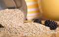 Steel cut oats spilling out of a measuring cup with fresh blackberries Royalty Free Stock Image